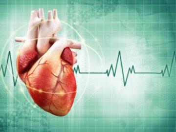 ритм сердцебиения человека