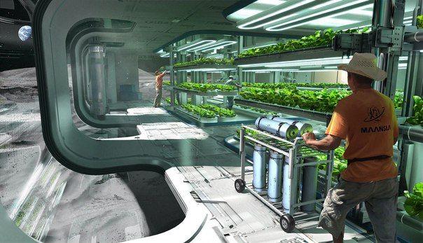 вырастить зелень в космосе