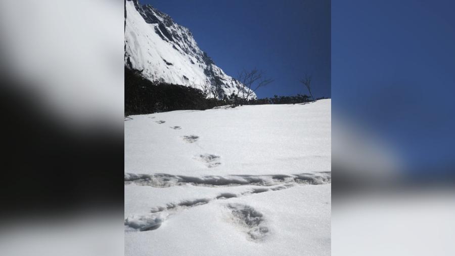 следы снежного человека в Гималаях